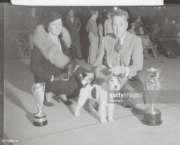 Hollywood show championKeythrope Pansy wirehaired fox terrier proudly stands beside the winning trophies with her owners Mr and Mrs FB Miller after...
