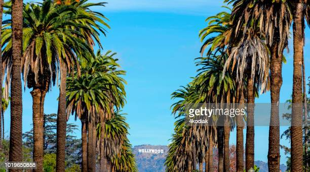 hollywood sign and palm trees - hollywood sign stock pictures, royalty-free photos & images