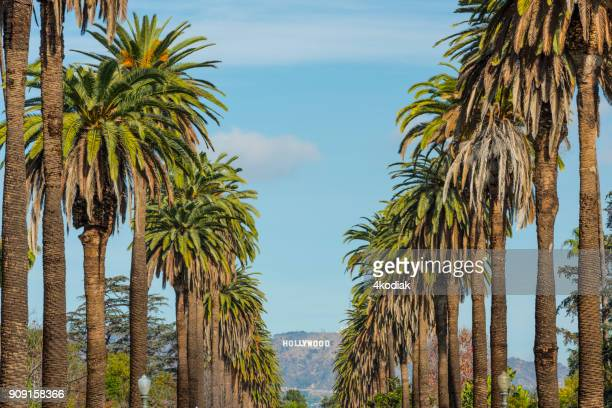 hollywood sign in los angeles  california  usa - hollywood sign stock pictures, royalty-free photos & images