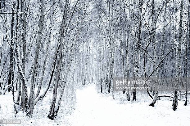 Holme Fen Winter