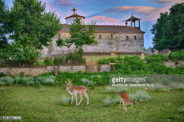 Holy church of Panagia Elafiotissa(Virgin Mary of deers) 3