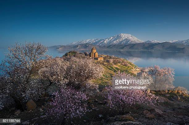 holy cross cathedral at akdamar island in springtime - van turkey stock pictures, royalty-free photos & images