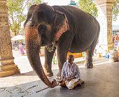 holy hindu elephant elephant handler at