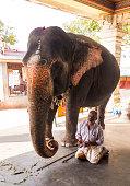 holy hindu elephant elephant handler amma
