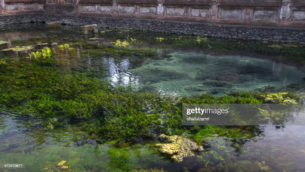 Holy spring water in Bali : Stock Photo