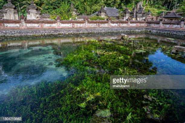 holy spring water in temple puru tirtha empul, bali, indonesia - shaifulzamri stock pictures, royalty-free photos & images