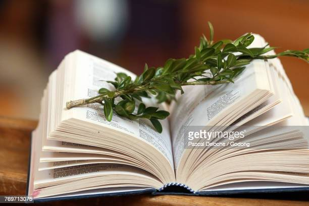 holy week. palm sunday celebration. bible and boxwood. saint nicolas de veroce. france. - easter religious stock pictures, royalty-free photos & images