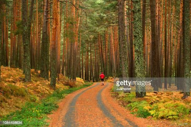 hombre solo practicando running en un bosque de pinos - segovia stock photos and pictures