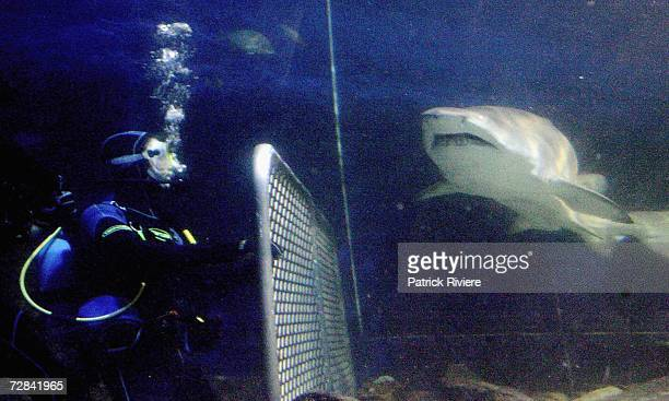 Home And Away actor Jon Sivewright launches the new Adventure experience Grey Nurse Shark Feed Dive at Manly's Ocean World on December 18 2006 in...