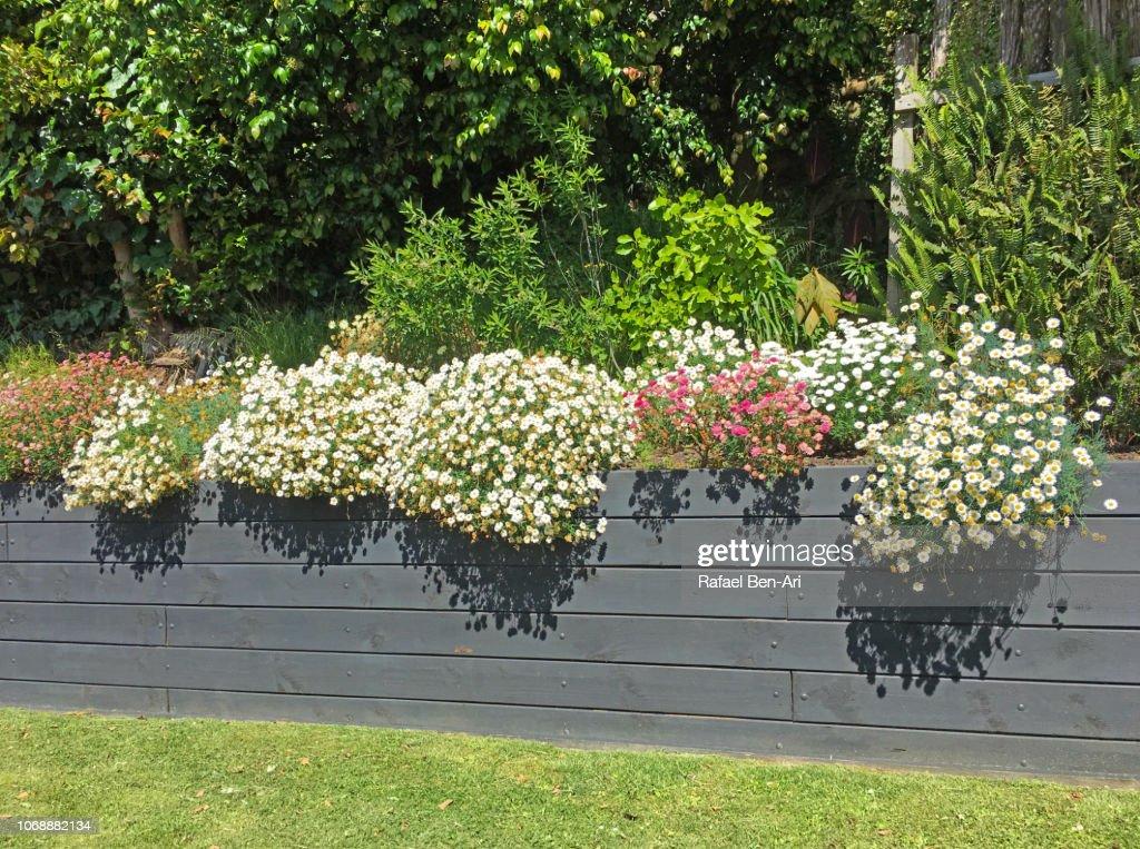 Home Garden Back Yard : Stock Photo