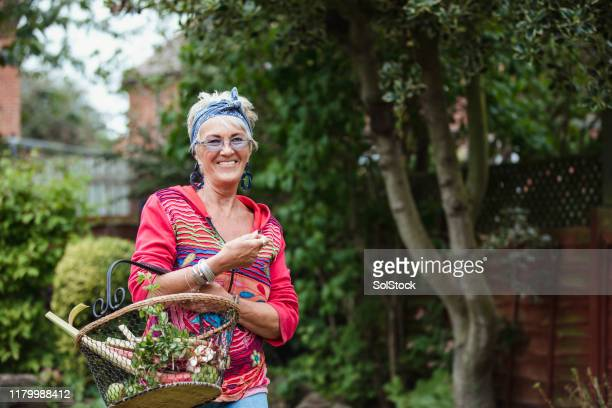 home grown rhubarb from her garden - disruptaging stock pictures, royalty-free photos & images