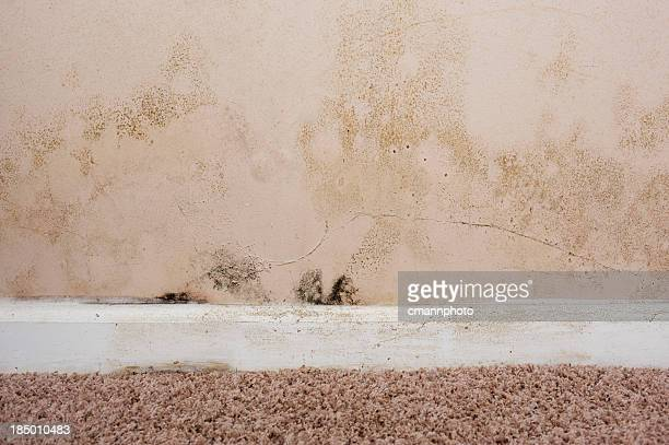 Home interior Mold on basement wall