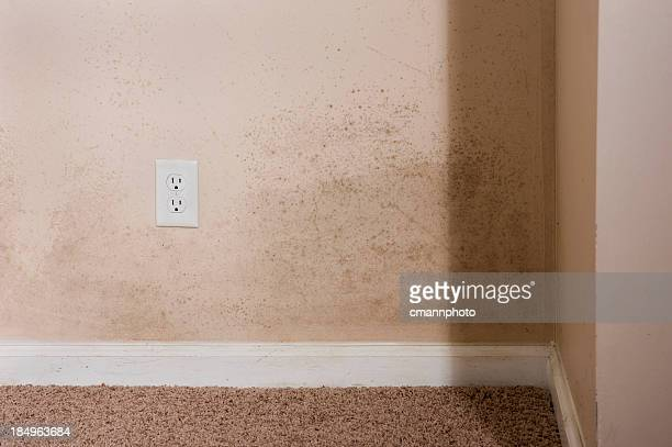 home interior mold - mildew stock photos and pictures