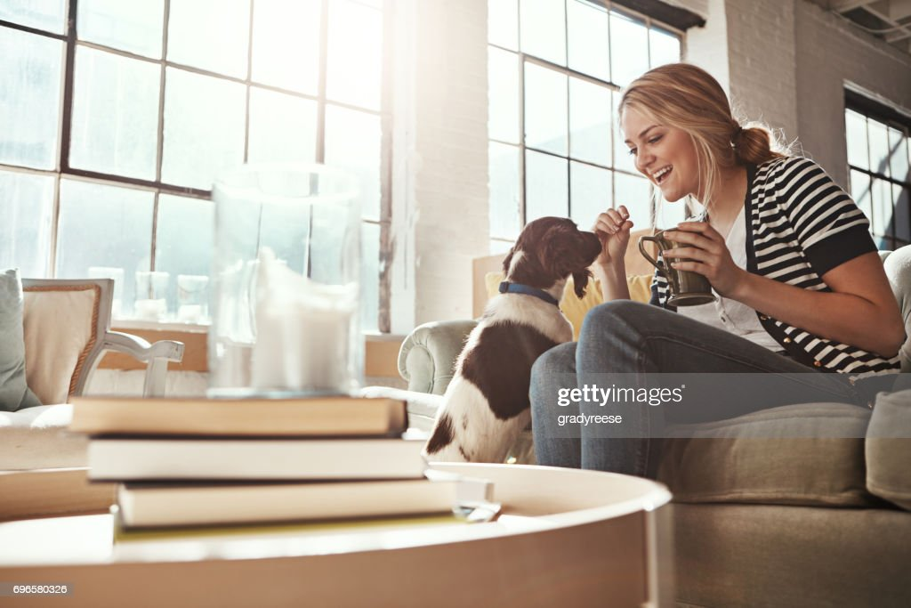 Home is where the dog is : Stock Photo