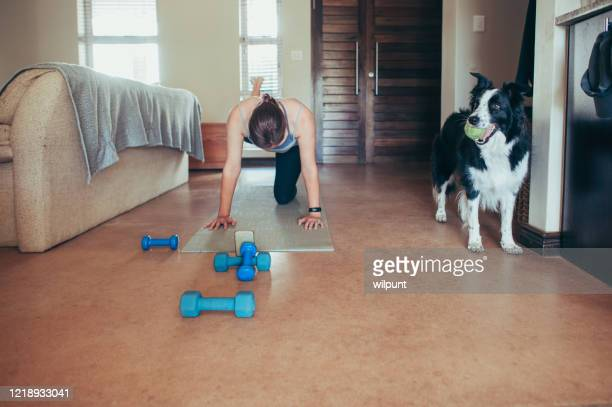 home pilates class on mobile phone with border collie pet dog with tennis ball looking on - drive ball sports stock pictures, royalty-free photos & images