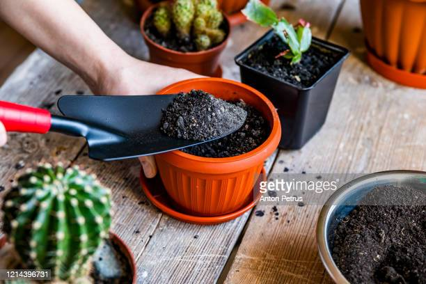 home plants. planting plants in pots - potting stock pictures, royalty-free photos & images