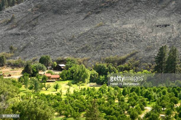 A home sits in a green area right next to a completely burned hillside on June 13 2018 near Hermosa Colorado The fire burning 23 miles northwest of...