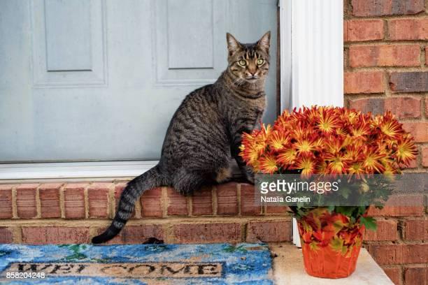 home sweet home - chrysanthemum stockfoto's en -beelden