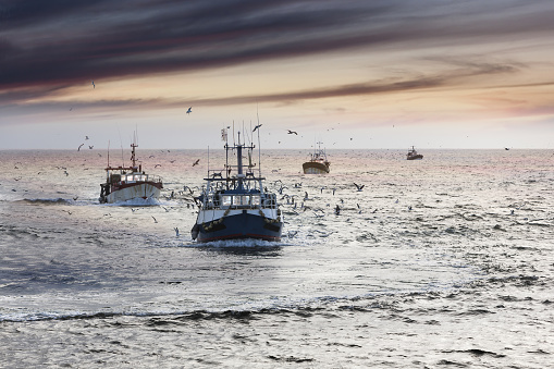 Homecoming: Tired fishermans ships approaching after a hard day, Le Guilvinec,Brittany, France 888350870