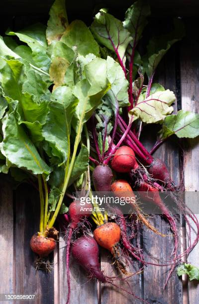 homegrown beetroot - cultivated stock pictures, royalty-free photos & images