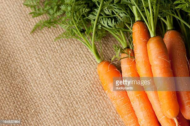 Homegrown Carrots on Burlap Background