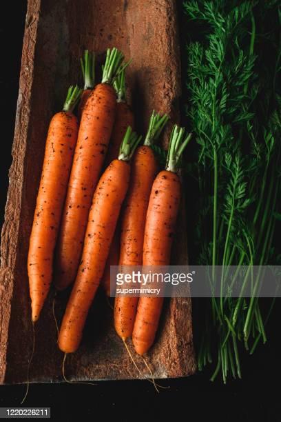 wortelen van eigen bodem. - wortel plantdeel stockfoto's en -beelden