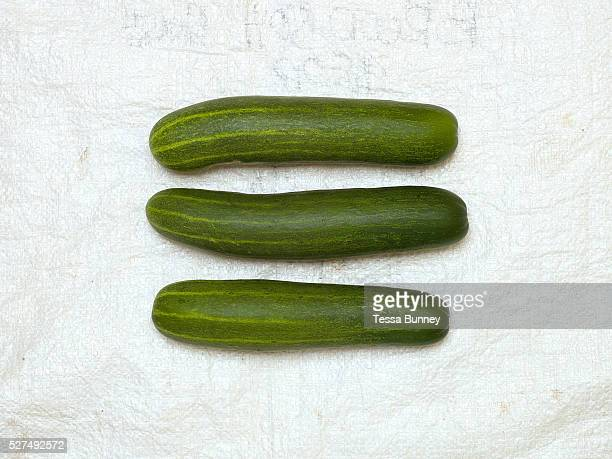 Homegrown organic cucumbers from Geronio and Teodora Ayson's garden in Pamantingan Esperanza Sultan Kudarat province Mindanao Island The Philippines...
