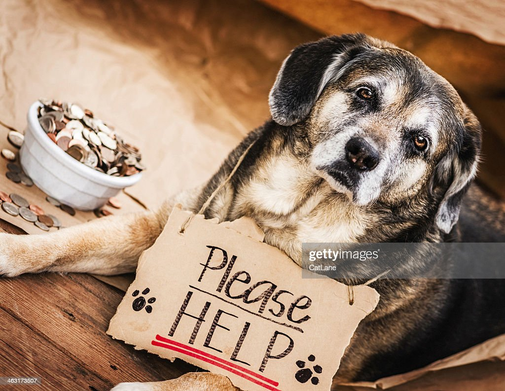 Homeless and Hungry Dog Begging for Help : Stock Photo