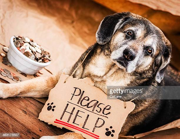 Homeless and Hungry Dog Begging for Help