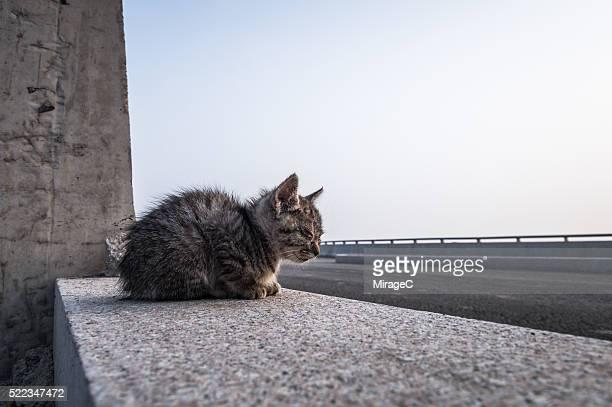 Homeless Baby Kitten Near Highway in Danger