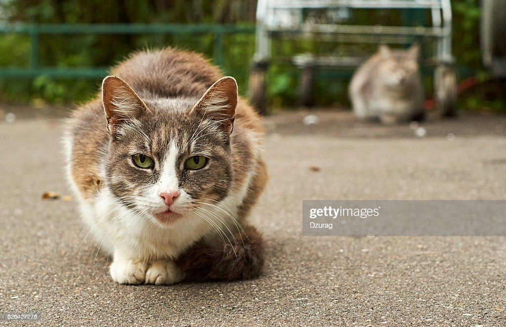 Homeless cats in the street : Stock Photo