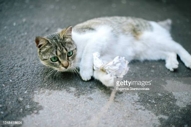 homeless cute cat playing on the street. - hairy bum stock pictures, royalty-free photos & images
