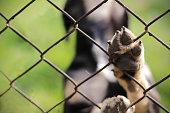 Homeless dog behind bars. Animal sanctuary.
