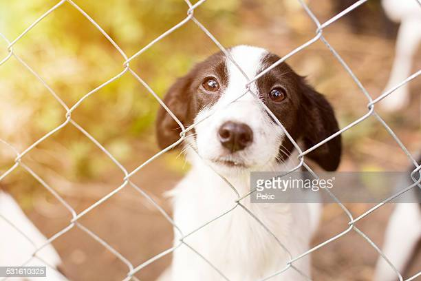 homeless dog behind bars - hek stockfoto's en -beelden