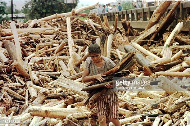 A homeless woman picks up some wood 31 October from a pile of uprooted trees left from the passage of hurricane Mitch in Tocoa in the district of...