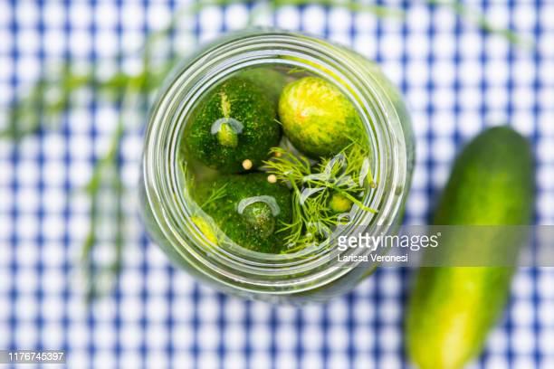 homemade dill gherkins in a jar - larissa veronesi stock-fotos und bilder