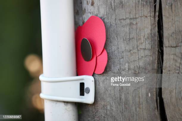 Homemade poppies are stuck to a lamp post to commemorate Anzac Day in Titirangi on April 24 2020 in Auckland New Zealand New Zealanders are preparing...