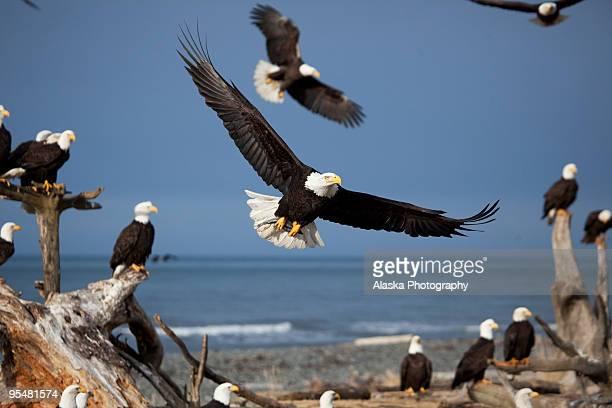Homer Eagles