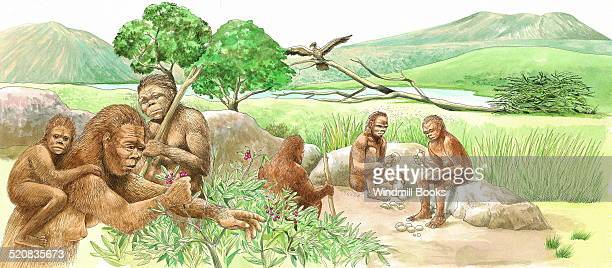 Homo habilis men chip away at rocks sharpening them for cutting up game or scraping hides The game would be trapped in a pit or run down by several...
