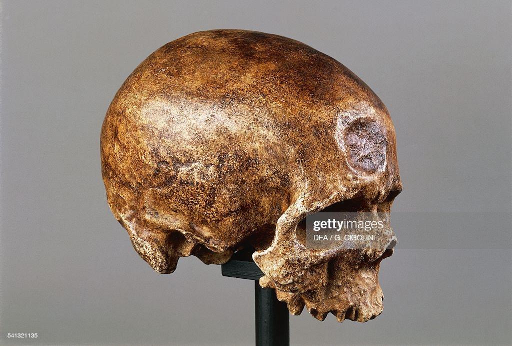 Homo sapien skull found in Abri de Cro-Magnon... : News Photo