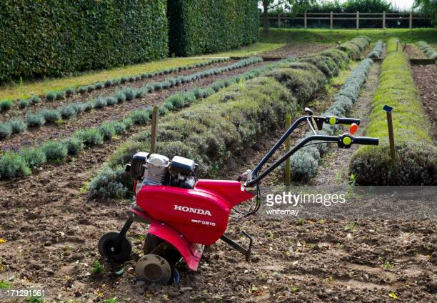 honda fg315 rotavator with rows of lavender - tiller stock photos and pictures