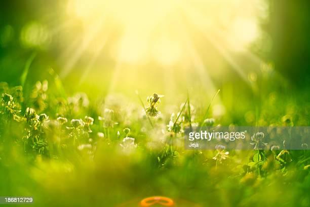 Honey bee の草地