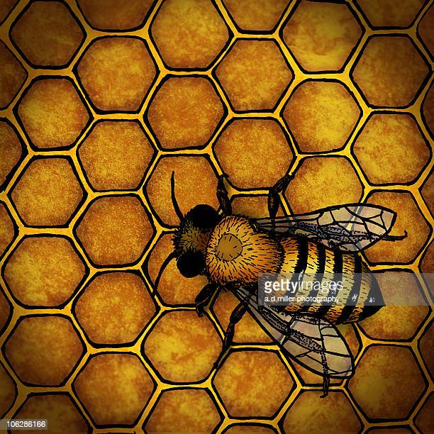 Honey Bee Drawing Stock Photos And Pictures