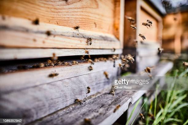 honey bees flying into wooden beehives - biene stock-fotos und bilder