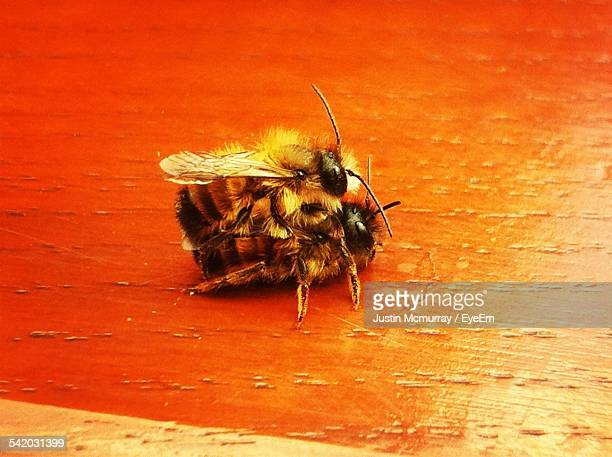 Honey Bees Mating On Wooden Table