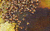 http://www.istockphoto.com/photo/honeybees-gm529116834-93220801