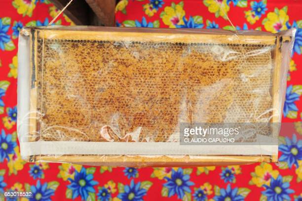 honeycomb displayed in country fair - images of brazilian wax stock pictures, royalty-free photos & images