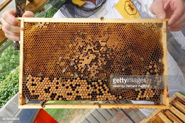 Honeycomb from a beehive
