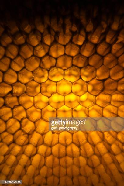 honeycomb macro photo - beehive stock pictures, royalty-free photos & images
