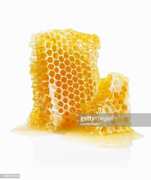 honeycomb on white background - collant photos et images de collection